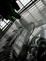 Tropical Rainforest Glasshouse (formerly Le Jardin d'Hiver or Winter Gardens), 1936, René Berger, Jardin des Plantes, Museum National d'Histoire Naturelle, Paris, France. View from below of leaves against the glass and metal structure of the Art Deco building.