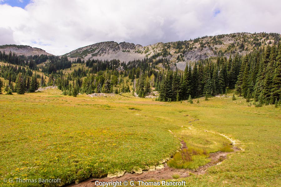 Fall colors had begun in Sunrise Meadow. The trail along Sourdough Ridge is visible in the background.