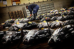 Tokyo, 1st of March 2010 - Tuna at Tsukiji wholesale fish market, biggest fish market in the world. 4:45 a.m, a middleman scrutinizing fresh tunas before the auction.