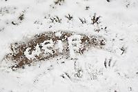 """Naturkunst im Winter, mit Schnee das Wort """"weiß"""" in den Schnee geschrieben"""