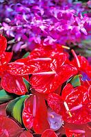 Colorful anthuriums at the Hilo open market