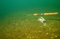 Underwater Scene-Fishing Rod<br /> <br /> ENGBRETSON UNDERWATER PHOTO