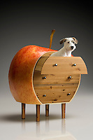 A puppy in a chest of drawers made from an apple.