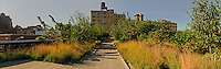 The High Line is a New York City park, designed by landscape architects James Corner Field Operations, with architects Diller Scofidio + Renfro, Manhattan, New York, USA