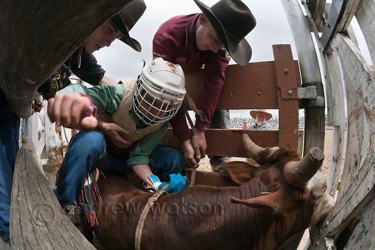 A bull rider climbs onto his mount in the bucking chute. Mareeba Rodeo, Mareeba, Queensland, Australia