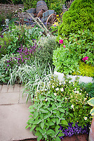 Herbs, flowers, ornamental grasses, raised beds, patio, old rustic charming farm cart, barrel and antique tools for ornamental garden decorations, evergreen Conifer Picea, Spanish lavender Lavandula stoechas, Potentilla, hosta, for a mixture of plants in the garden, culinary sage Salvia officinalis, golden oregano Origanum, great mix of intermingled plants, perennials, shrubs, flowers, ornamental grasses, herbs, edibles