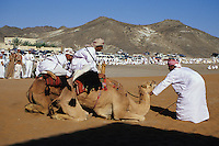 Mudayrib, Oman, Arabian Peninsula, Middle East - Camel jockeys prepare their mounts for the start of a camel race.  Races are part of the festivities at the Eid al-Adha (Feast of the Sacrifice), the annual feast through which Muslims commemorate God's mercy in allowing Abraham to sacrifice a ram instead of his son, to prove his faith.