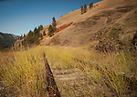 The abandoned Camas Prairie railroad tracks in central Idaho