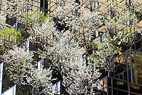 Trump Tower, trees, spring, Manhattan, Manhattan, Fifth Avenue, New York City, New York, USA, designed by Der Scutt