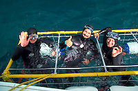 GANSBAAI, SOUTH AFRICA, DECEMBER 2004. Ecstatic divers pop up after a Great White passed the cage. Brian Mc Farlane organises Great White Shark cage diving tours out of Gansbaai. Gansbaai is one of the best places in the world to see the Great white in its natural habitat. Photo by Frits Meyst/Adventure4ever.com