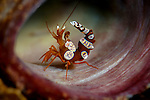 Lembeh
