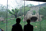 Philadelphia Zoo, Big Cat Falls, viewing cats behind glass..Philadelphia, Pennsylvania, PA USA.  Photo copyright Lee Foster, 510-549-2202, lee@fostertravel.com, www.fostertravel.com. Photo 248-30840