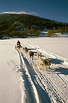 California: Tahoe area in winter.  Dog sledding. Photo calski102..Photo copyright Lee Foster, 510/549-2202,  lee@fostertravel.com, www.fostertravel.com