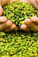 Detail of chef Corrodo Assenza's hands cupping a pile of Bronte pistachios