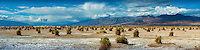 Death Valley National Park, DVNP, Devil's Cornfield, Route 190, Panorama; Desert; Great Basin; California; CGI Backgrounds, ,Beautiful Background