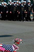 Officers and sailors attached to Naval Base Point Loma Submarine Base march past a dog in downtown San Diego during the Veterans Day Parade, Saturday November 10 2007.