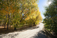 Sunburst through autumn trees at Bannockburn, Central Otago, New Zealand - stock photo, canvas, fine art print