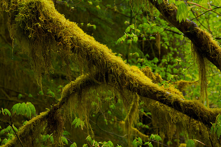 how to get rid of moss on tree branches