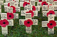 The Field of Remembrance at St Margaret's Church in Westminster.  A close-up of the wooden crosses decorated with a red poppy.