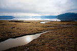 Idaho, North, Coeur d'Alene. Low winter water levels reveal sunken logs and the muddy lake bottom of Cougar Bay on Lake Couer d'Alene.