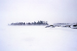 Scenic White Out