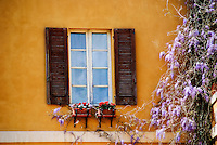 Wisteria climbs a yellow wall beside a window in Alghero, Sardinia, Italy