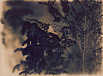 Image creates by using an alternative photographic process called cyanotype