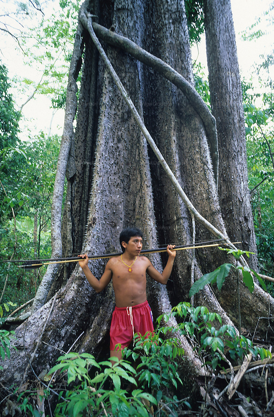 YANOMAMI TRADITIONAL LIFESTYLES , Amazon, near Boavista, northern Brazil, South America. A Yanomami wearing football shorts and carrying a spear, with a huge hardwood tree in the middle of primary rainforest. Ecological biosphere and fragile ecosystem where flora and fauna, and native lifestyles are threatened by progress and development. The rainforest is home to many plants and animals who are endangered or facing extinction. This region is home to indigenous primitive and tribal peoples including the Yanomami and Macuxi.