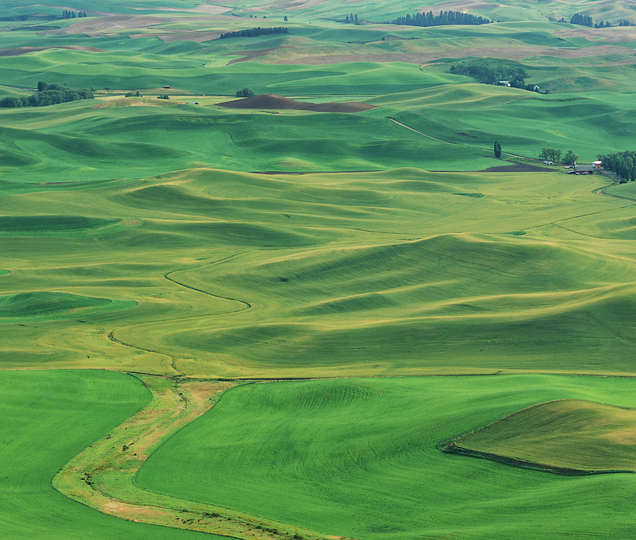Green rolling hills of the Palouse are seen in springtime as the coming harvest grows in the nutrient rich soil.