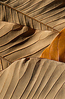 Intricate patterns on earth colored fallen autumn leaves.