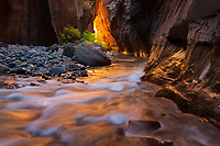 Golden light reflected off the Virgin River and Sandstone Cliffs during autumn in Zion National Park.