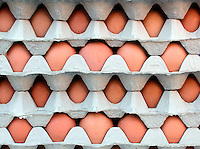 FARMERS MARKET: Eggs In Cartons