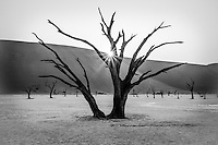 The iconic Deadvlei in Namibia