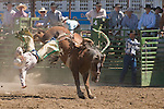 A cowboy is bucked off a saddle bronc at the Jordan Valley Big Loop Rodeo