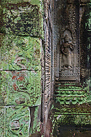 The green algae in Phreah Khan is a microbial biofilms have been found degrading sandstone at Angkor Wat, Preah Khan, and the Bayon and West Prasat in Angkor. The dehydration and radiation resistant filamentous cyanobacteria can produce organic acids that degrade the stone. A dark filamentous fungus was found in internal and external Preah Khan samples, while the alga Trentepohlia was found only in samples taken from external, pink-stained stone at Preah Khan.<br /> <br /> Preah Khan was built on the site of Jayavarman VII's victory over the invading Chams in 1191. Unusually the modern name, meaning &quot;holy sword&quot;, is derived from the meaning of the original&mdash;Nagara Jayasri (holy city of victory). The site may previously have been occupied by the royal palaces of Yasovarman II and Tribhuvanadityavarman.<br /> <br /> The temple's foundation stela has provided considerable information about the history and administration of the site: the main image, of the bodhisattva Avalokiteśvara in the form of the king's father, was dedicated in 1191 (the king's mother had earlier been commemorated in the same way at Ta Prohm). 430 other deities also had shrines on the site, each of which received an allotment of food, clothing, perfume and even mosquito nets; <br /> the temple's wealth included gold, silver, gems, 112,300 pearls and a cow with gilded horns.<br /> The institution combined the roles of city, temple and Buddhist university: there were 97,840 attendants and servants, including 1000 dancers and 1000 teachers.<br /> <br /> The temple is still largely unrestored: the initial clearing was from 1927 to 1932, and partial anastylosis was carried out in 1939. Since then free-standing statues have been removed for safe-keeping, and there has been further consolidation and restoration work. Throughout, the conservators have attempted to balance restoration and maintenance of the wild condition in which the temple was discovered.
