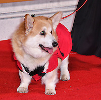 Corgi dog<br /> Premiere of The Crown, a new Netflix TV series about the reign of Queen Elizabeth II, at Odeon Leicester Square, London, England November 01, 2016.<br /> CAP/JOR<br /> &copy;JOR/Capital Pictures /MediaPunch ***NORTH AND SOUTH AMERICAS ONLY***