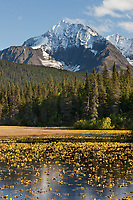 Autumn colors on the mountain hillsides surrounding Bear lake, Kenai mountains, Chugach National Forest, southcentral, Alaska.