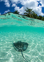 Southern Stingray Split Level<br />