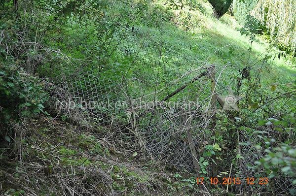 RIVERSIDE AMENITY LAND AT STREATLEY. TITLE NO: BK381630<br /> Boundary fence.