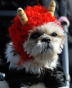 "A dog is disguised as ""oni"" (deamon) during  the Setsubun festival  at Tokyo's Zojoji temple as partwhich marks the lunar calendar start of spring."