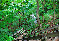 Clifton Gorge Nature Preserve, Clifton, Ohio