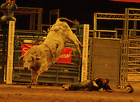 CITY OF INDUSTRY, CA - JULY 16: Bull Rider at the 32nd Annual Bill Pickett Invitational Rodeo Rides, Southern California at The Industry Hills Expo Center in the City of Industry on July 16, 2016 in the City of Industry, California. Credit: Koi Sojer/Snap'N U Photos/MediaPunch