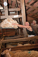 Weighing Wool Removed from Sheep, National Museum of Sheep and Shearing, Masterton, New Zealand, north island, Wairarapa region.  Previously known as the Shear Discovery Centre.