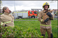 BNPS.co.uk (01202 558833)<br /> Pic: KerriannGodwin/BNPS<br /> <br /> Hugo with one of the firefighters who helped to free him.<br /> <br /> This is the hilarious moment Hugo the miniature dog got stuck in his garden gate while the ginger cat he was chasing smugly looks on.<br /> <br /> The Chihuahua Yorkshire terrier cross dog tried to run through a gap in the metal gate after spotting the tom cat prowling outside his front garden in Bournemouth.<br /> <br /> Despite his tiny frame, the three-year-old got stuck fast in the gap and was unable to get himself free.<br /> <br /> His owner, Kerriann Godwin, calling the fire brigade which arrived to free him.