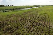 Weiland - Grasland   Pasture