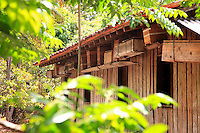 Brazil, State of Pará. Like the Indians before them, the peasants of Indian and Portuguese mixed-race origins, called Caboclos in the region, have semi-domesticated the bees by setting them up in thrown together hives of bamboo or just simply wooden cases near their houses.