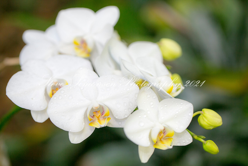 Orchids<br />