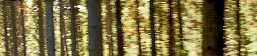 Gold Forest 2, NZ