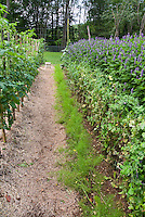 Vegetable garden, carrots, peas, Agastache, mulched path rows wiuthstraw, tomatoes,