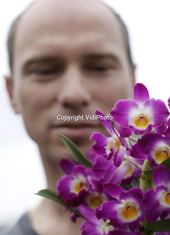 Foto: VidiPhoto<br /> <br /> DELFGAUW - Waar de gewone phalaenopsis soms wat slungelachtig oogt, bruist familielid Dendrobium van wellust en uitbundigheid. De stamorchidee zit tjokvol sjieke bloemen en staat met twee dagen van onder tot boven in volle bloei. Het is de Hoog Orchids in Delfgauw inmiddels gelukt om paradepaardje Dendrobium Nobil&eacute; in meerdere kleuren jaarrond te kweken, vertelt eigenaar Marco de Hoog. Samen met broer Arjan runt hij de twee kwekerijen (4,8 ha.) in Pijnacker en Delfgauw en behoren ze tot de twee grootste Dentrobiumkwekers van ons land. Per week verwisselen zo'n 40.000 planten van eigenaar. De exclusieve Nobil&eacute; is vooral verkrijgbaar bij groothandel en (de betere) bloemisten, en populair in heel Europa. Slechts 5 procent van de productie wordt afgezet in eigen land. Voor massaproductie is de Dendrobium vooralsnog minder geschikt. Het in de markt zetten van een kwalitatief goed product vereist een lange teelt (52 weken) en een langdurig ontwikkelingsproces. Wat populariteit betreft moet de orchidee 2.0 het voorlopig nog afleggen tegen de doorsnee phalaenopsis.